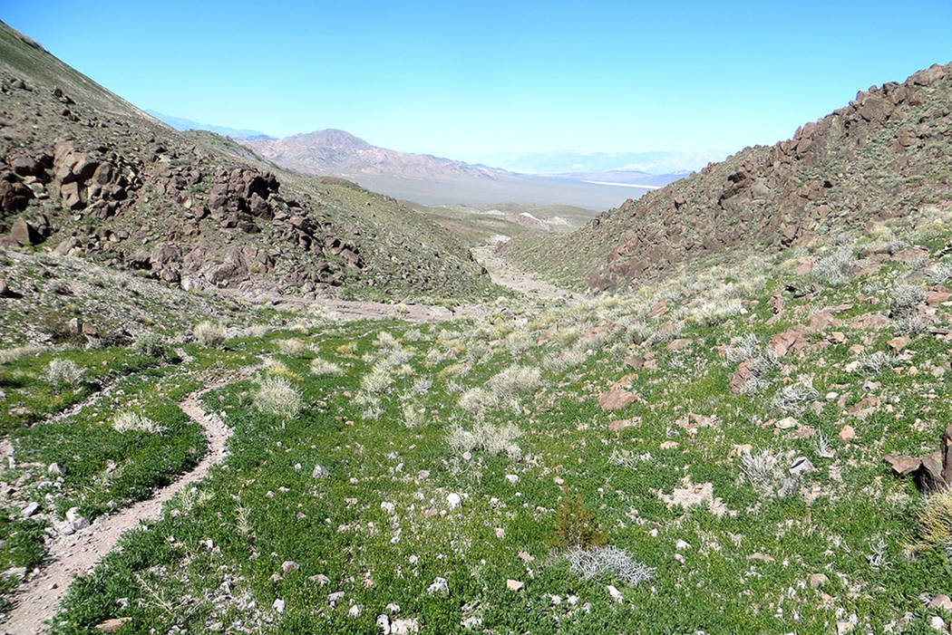 """A spring green carpet of plants covers the area known as the """"Bowling Alley"""" at the southern edge of Death Valley National Park on March 6, 2015. Congress just voted to include the Bowling Alley i ..."""
