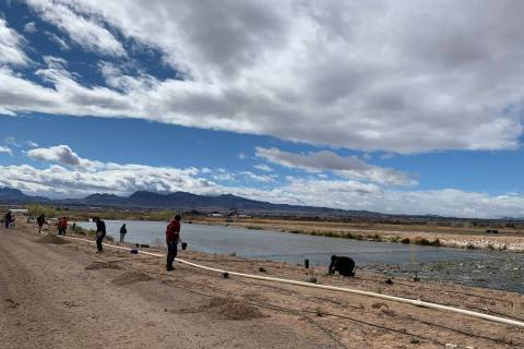 Volunteers and organizers of the semiannual Green-Up project plant thousands of trees and shrubs on Saturday, March 2, 2019, morning at the Las Vegas Wash. Jessica Terrone Las Vegas Review-Journal