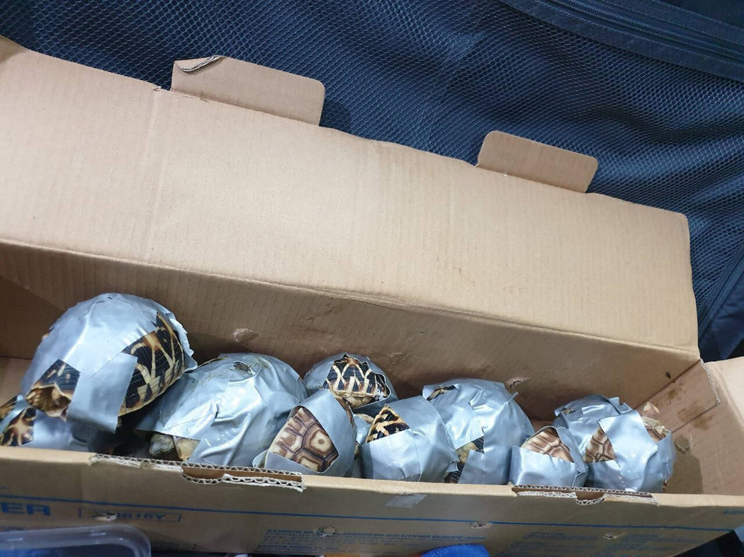 In this March 3, 2019, handout photo provided by the Bureau of Customs Public Information Office, duct-taped turtles are piled inside a box in Manila, Philippines. Philippine authorities said that ...