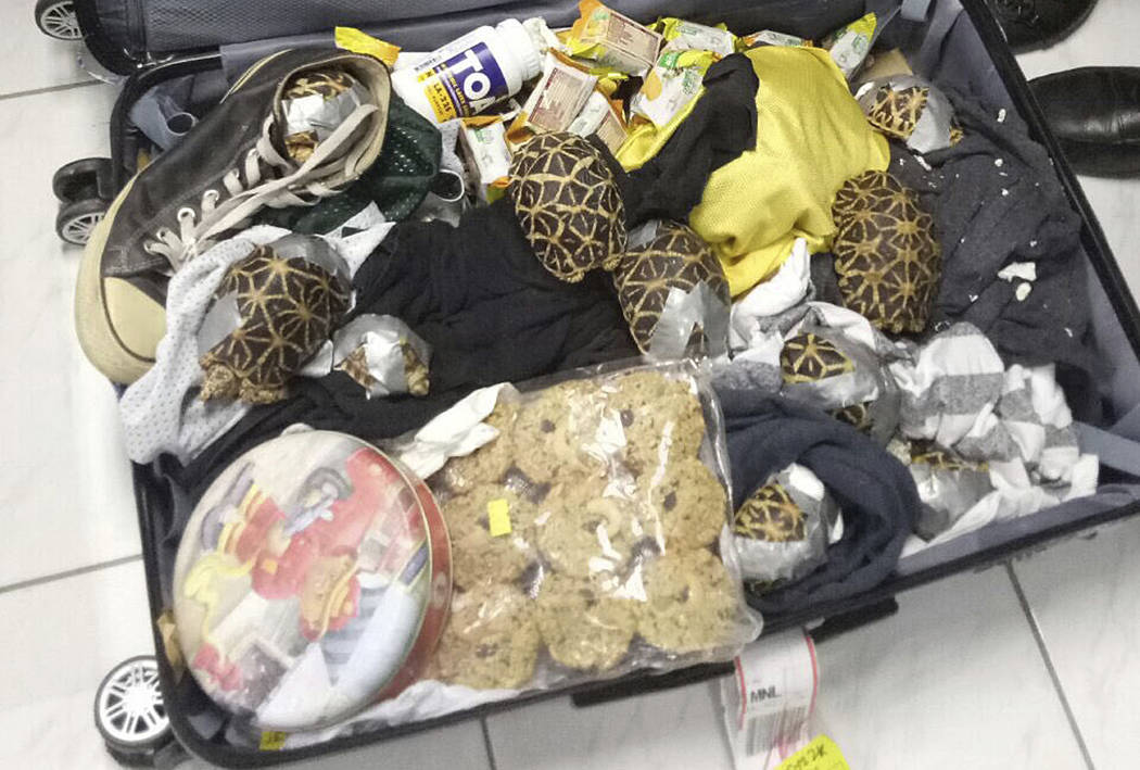 In this March 3, 2019, handout photo provided by the Bureau of Customs Public Information Office, duct-taped turtles are mixed inside luggage as they are presented to reporters in Manila, Philippi ...