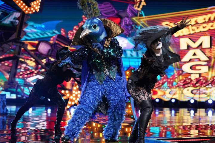 "Peacock is seen ""The Masked Singer"" (Michael Becker/Fox)"
