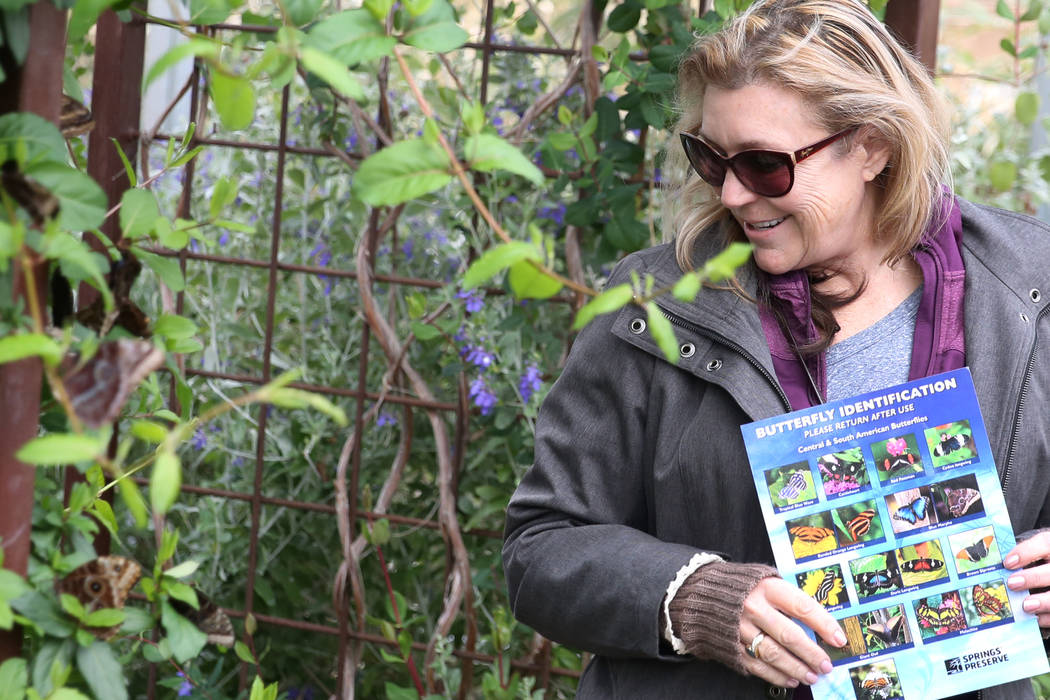 Yvonne Funderburgh of Ione, Calif., visits the Butterfly Habitat at Springs Preserve on Tuesday, March. 12, 2019, in Las Vegas. Bizuayehu Tesfaye Las Vegas Review-Journal @bizutesfaye