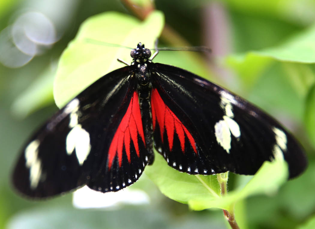 Butterfly Facts For Kids | Butterfly Habitat & Diet