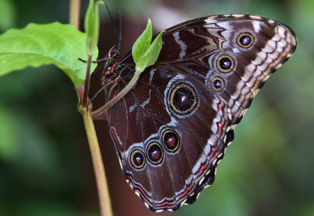 Urban rights-of-way as extensive butterfly habitats: A ...