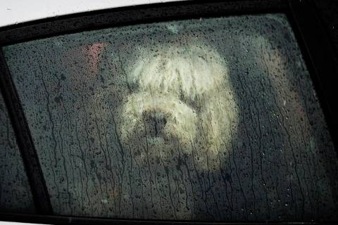 A dog looks out a window from a car parked along Nicollet Avenue on a rainy day on Saturday, March 9, 2019, in Minneapolis. A storm bringing a mixed bag of heavy, wet snow in some areas and rain a ...
