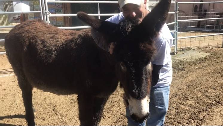 Brian Smith with one of the burros at Funny Farm Mustangs. (Mia Sims, Las Vegas Review-Journal/@miasims__)