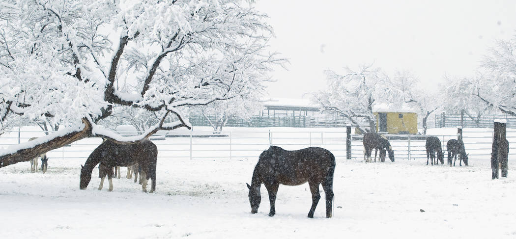 Horses stand in a snow-covered field near the Bonnie Springs Motel west of Las Vegas in December 2008. (Las Vegas Review-Journal file)