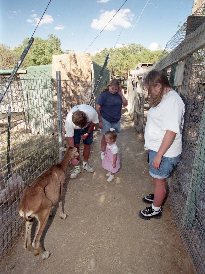 The petting zoo at Bonnie Springs has been a favorite attraction for families for years. (Las Vegas Review-Journal file)