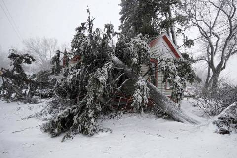 Trees snapped by high winds from a late winter storm packing hurricane-force winds and snow cover the Eugene Field house in Washington Park Wednesday, March 13, 2019, in Denver. (AP Photo/David Za ...