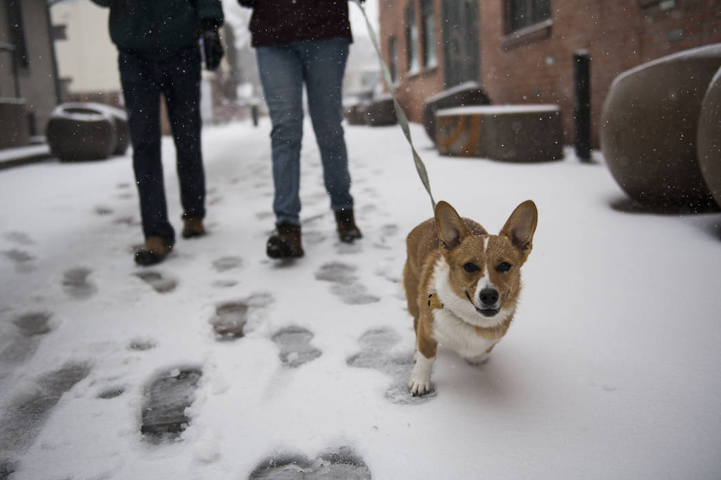 People walk a dog in the snow on Wednesday, March 13, 2019, in Fort Collins, Colo. Low air pressure is how meteorologists measure the strength of a storm, and this is the strongest in Colorado sin ...