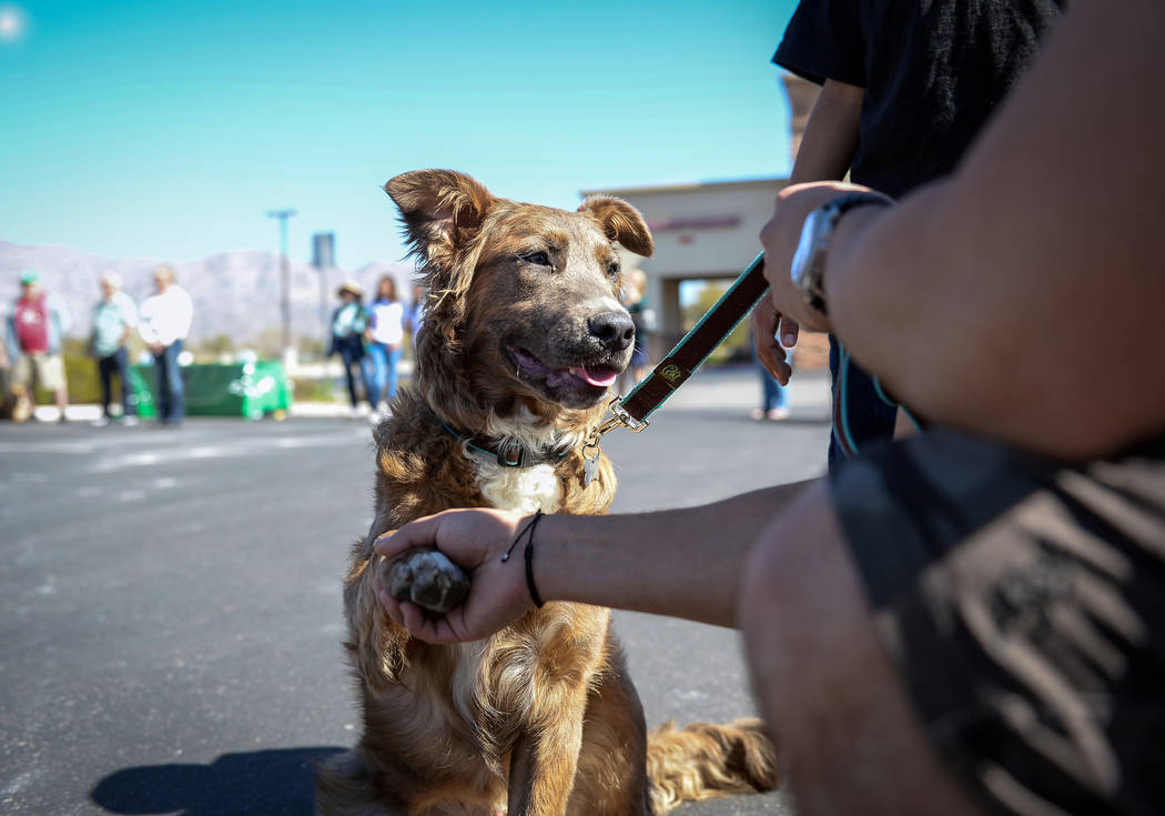 """Veteran Sheldon Moniz from Las Vegas shakes the paw of his new dog Warrior as the Nevada Department of Corrections partners with the """"Those Left Behind"""" Foundation to provide veterans in the commu ..."""