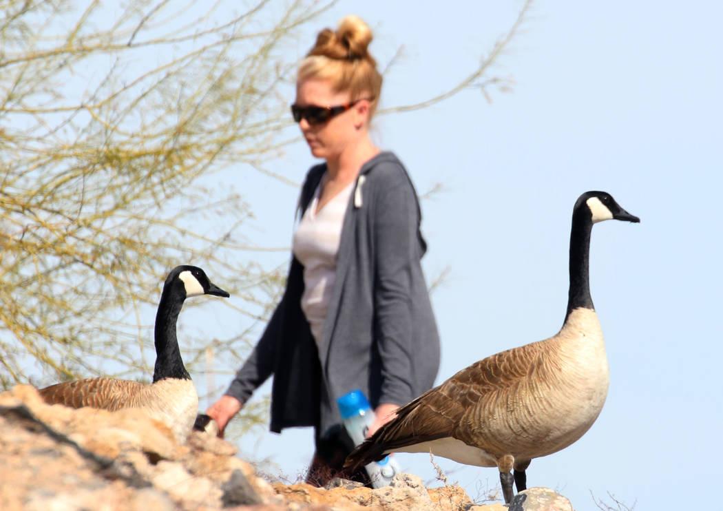 Erica Rosenthal of Henderson walks at Cornerstone Park in the morning sun Tuesday, March. 19, 2019, in Henderson. (Bizuayehu Tesfaye/Las Vegas Review-Journal) @bizutesfaye