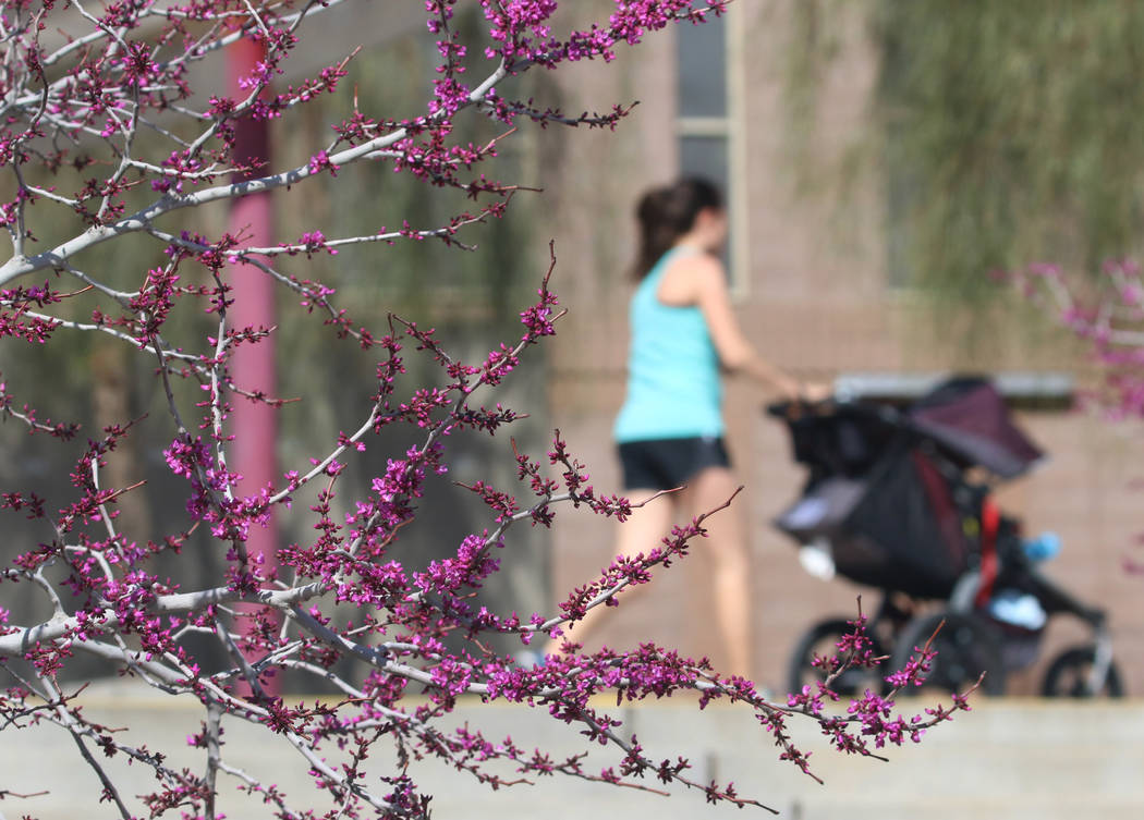 A woman walks past trees in bloom at Cornerstone Park in the morning sun Tuesday, March. 19, 2019, in Henderson. (Bizuayehu Tesfaye/Las Vegas Review-Journal) @bizutesfaye