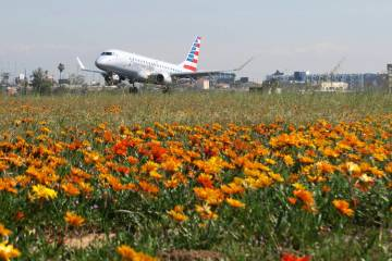 Flowers in bloom between runways on the north side of Los Angeles International Airport, treating visitors to a rare visual spectacle on Monday, March 18, 2019. (Los Angeles World Airports via AP)