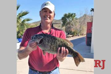 Tim Myers, of Las Vegas, hoists the 7.38-pound smallmouth bass that could best the old Lake Mohave smallmouth bass record by nearly a full pound. He caught the fish during a winning effort at the ...