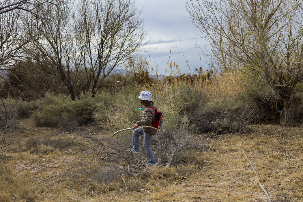 Boone Schmidt, 5, walks through the park during the Nature Tykes program at Clark County Wetlands Park in Las Vegas, Wednesday, March 20, 2019. The program incorporates story time, crafts, and exp ...