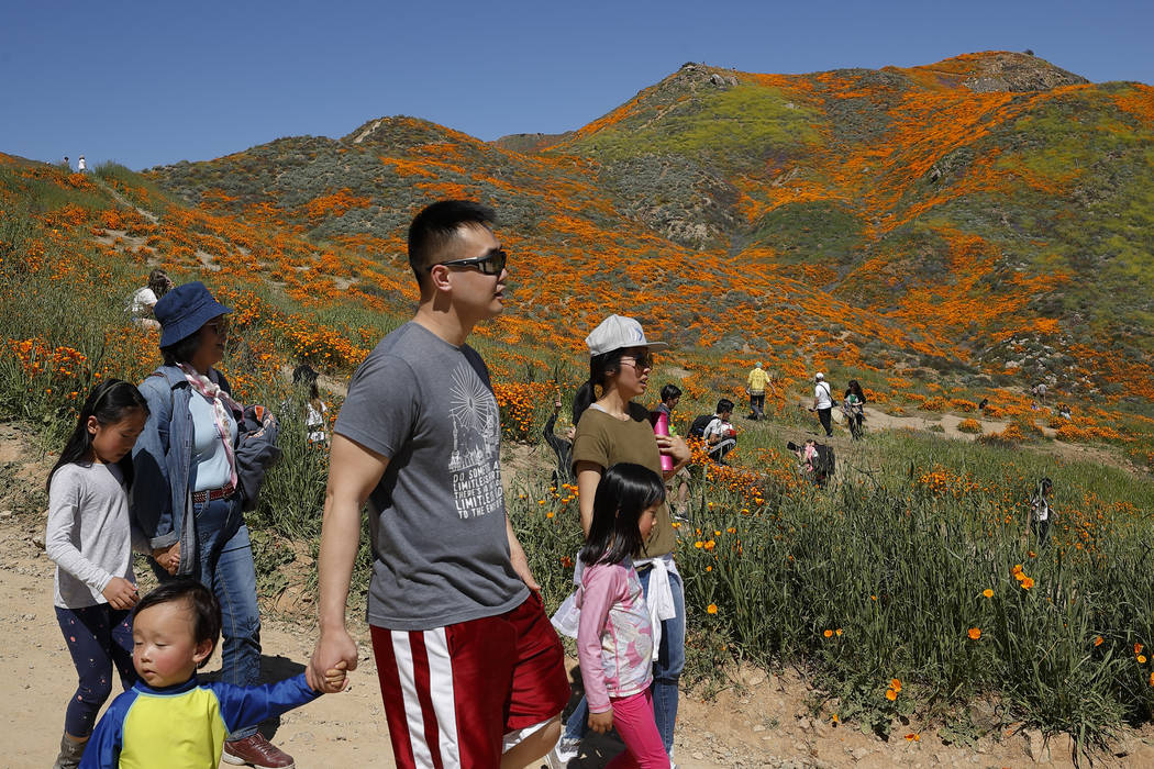 People walk among wildflowers in bloom Monday, March 18, 2019, in Lake Elsinore, Calif. (AP Photo/Gregory Bull)