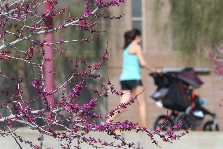 A woman walks past trees in bloom at Cornerstone Park in the morning sun Tuesday, March. 19, 2019, in Henderson. Bizuayehu Tesfaye Las Vegas Review-Journal @bizutesfaye