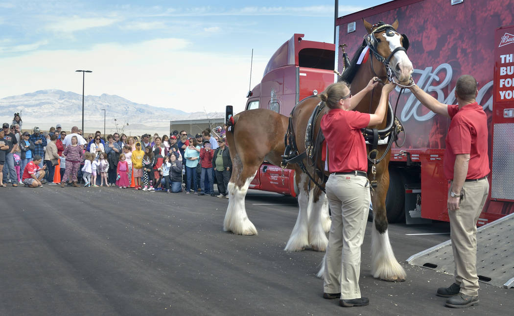 Handler Shelby Zarobinski, left, and hitch supervisor and driver Doug Bousselot prepare a horse for hitching to the beer wagon during a visit by the Budweiser Clydesdales to the Smith's Mar ...