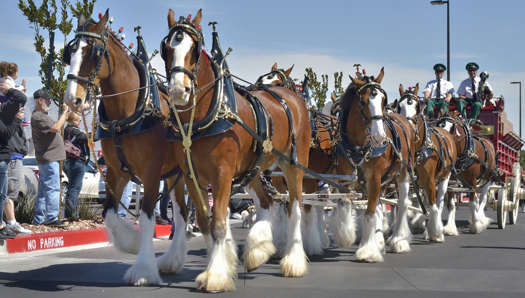 The Budweiser Clydesdales are shown during a visit to the Smith's Marketplace at 9710 W. Skye Canyon Park Drive in Las Vegas on Saturday, March 23, 2019. (Bill Hughes/Las Vegas Review-Journal)