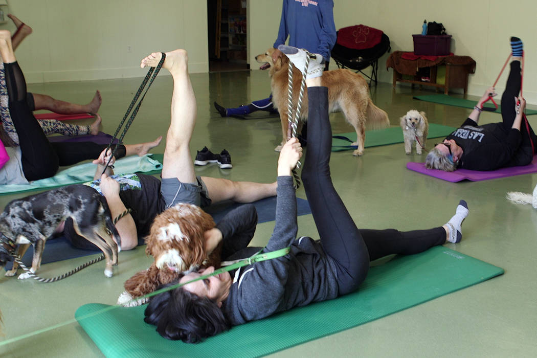 Cathy Brooks, owner of the Hydrant Club, participates in dog yoga on Saturday, March 23, 2019. The Hydrant Club in downtown Las Vegas, is a social club for dogs and their people. Recently the club ...