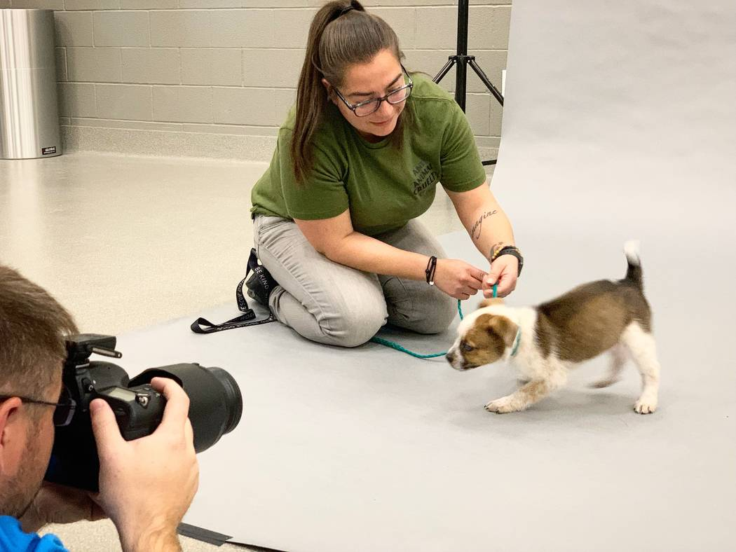 Athena gets her photo taken in preparation for the Las Vegas Animal Foundation's Best in Show e ...