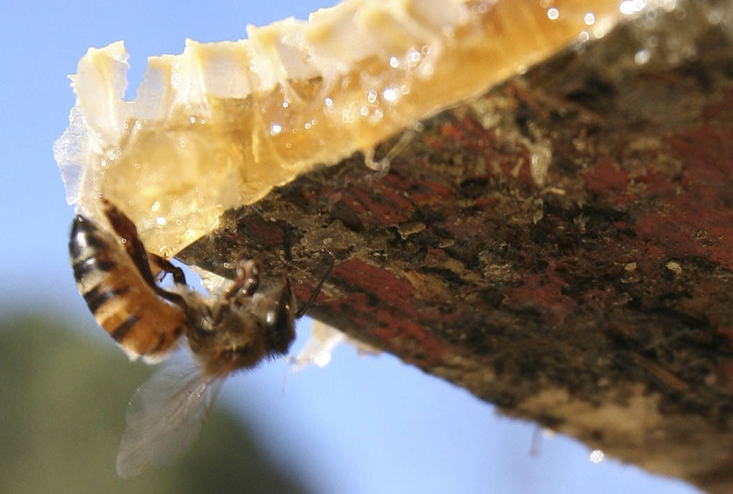 A Henderson state senator's bill to ban beekeeping in urban and suburban areas ran into plent ...