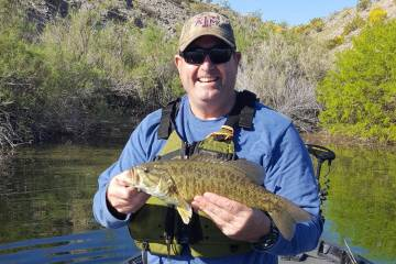 This Lake Mohave smallmouth bass eventually took a plastic worm fished on a drop shot, but it t ...