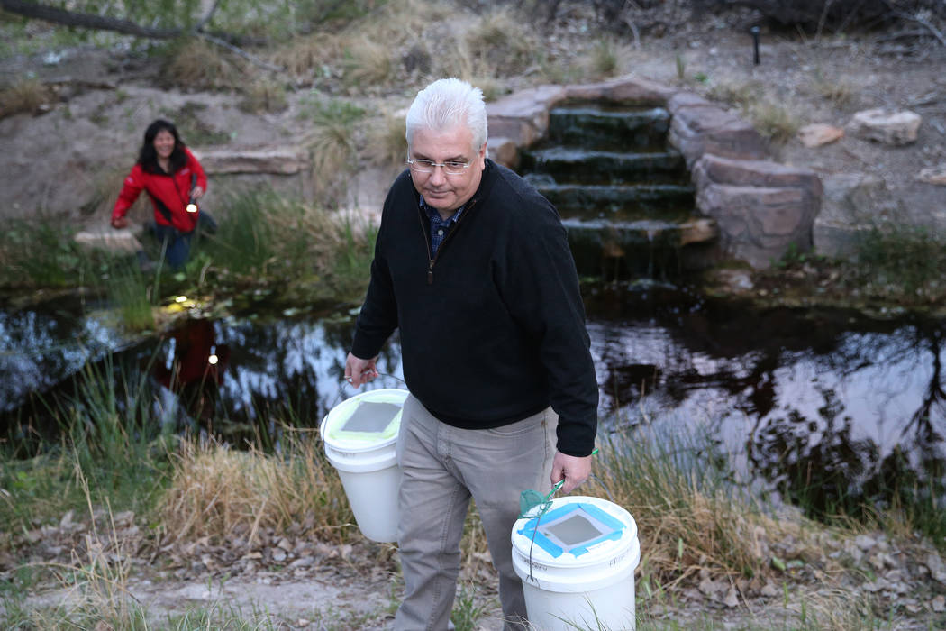 Raymond Saumure, environmental biologist for the Southern Nevada Water Authority, releases reli ...