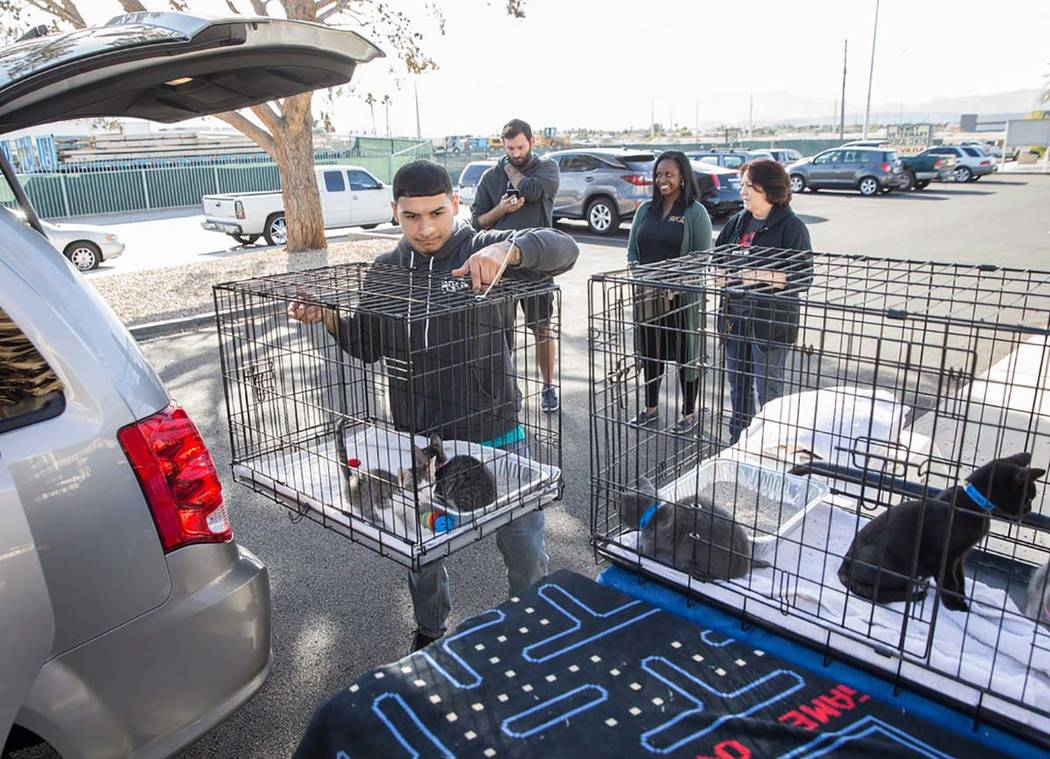 Abel Vargas-Moreno, left, lifts a crate of kittens out of a delivery van at the Nevada Society ...