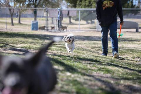 Tucker runs beside his owner, Ernesto Castano, on a warm, sunny day at Woofter Family Park in L ...
