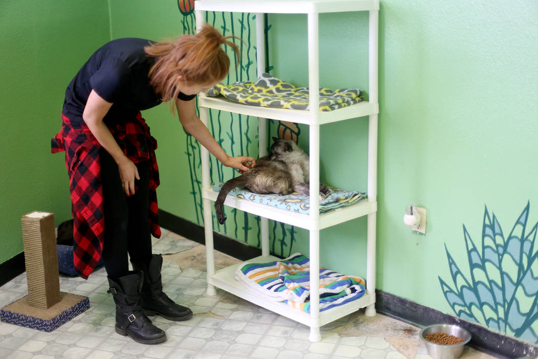 Foster Coordinator Shelby Haycock pets Havana in the Cat Condo area at the Nevada Society for t ...