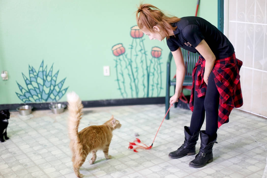 Foster Coordinator Shelby Haycock plays with Gingeraffe in the Cat Condo area at the Nevada Soc ...