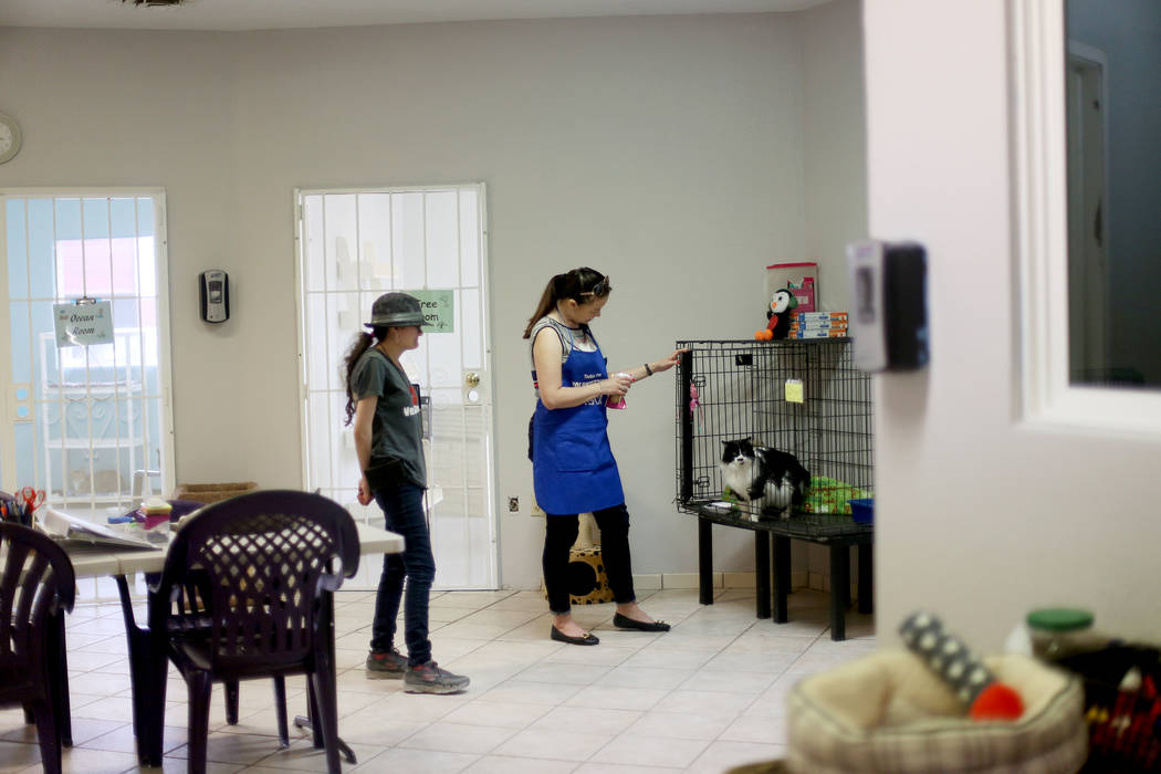 A volunteer, who declined to be named, talks to Oreo in the Cat Condo area at the Nevada Societ ...