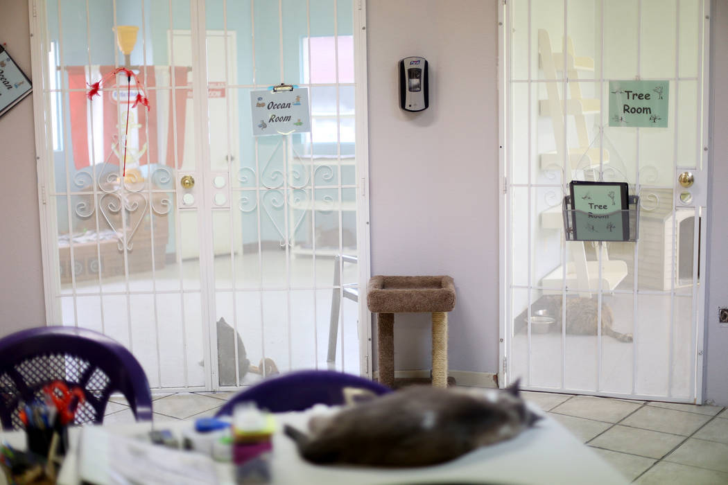 The Cat Condo area at the Nevada Society for the Prevention of Cruelty of Animals in Las Vegas, ...