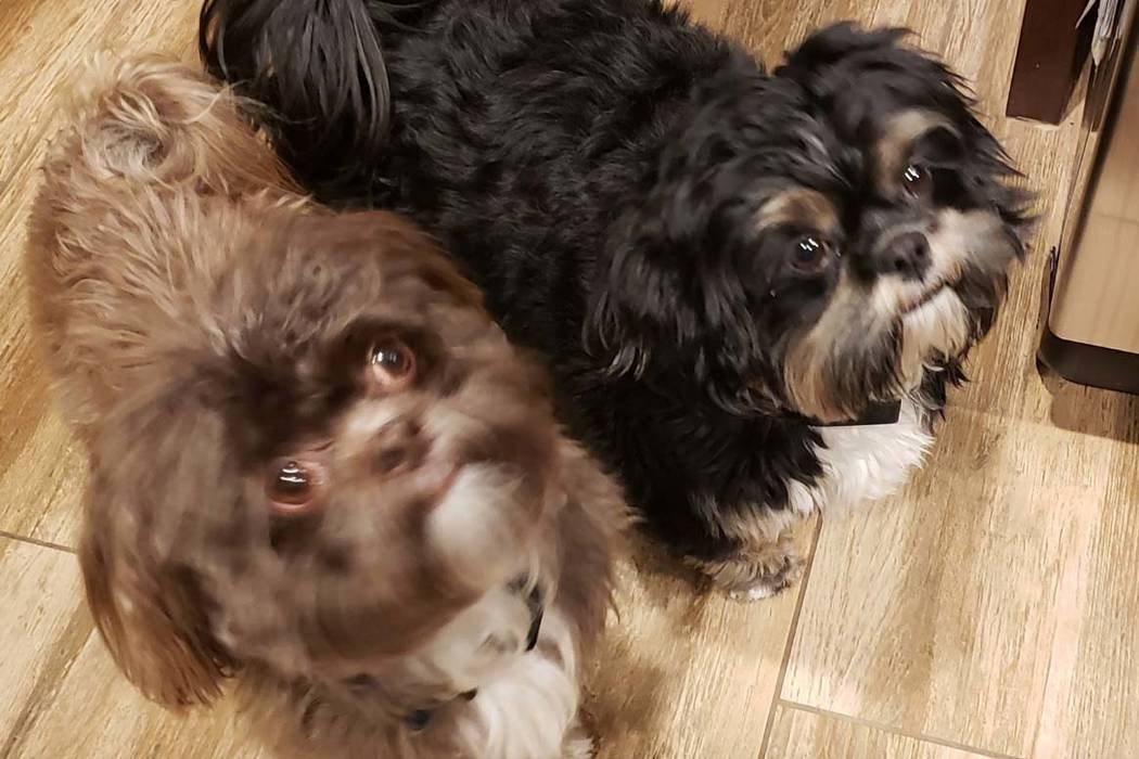 Teri and Sean Cornwall's 3-year-old Shih Tzus Luke and Chewy were poisoned but survived. (Sean ...