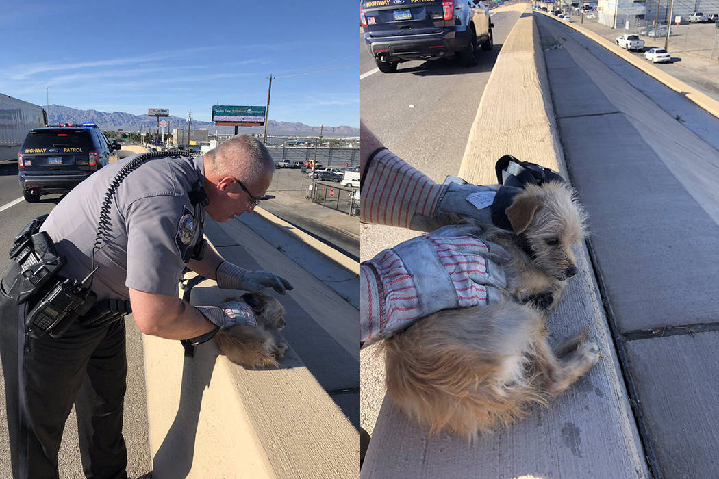 Nevada Highway Patrol troopers rescued a dog on Interstate 15 near Washington Avenue in Las Veg ...