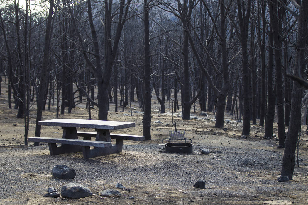 Part of the Strawberry Creek campground is shown surrounded by trees damaged by the Strawberry ...