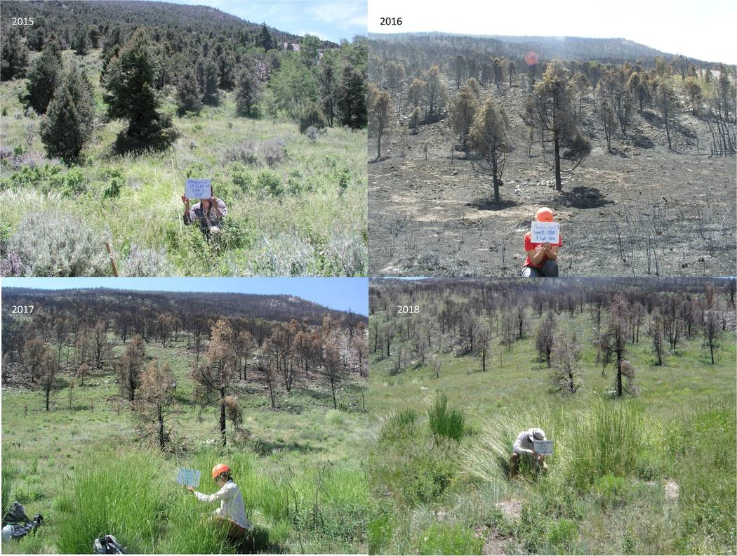 Researchers hold signs charting forest conditions before and after a 2016 wildfire that burned ...