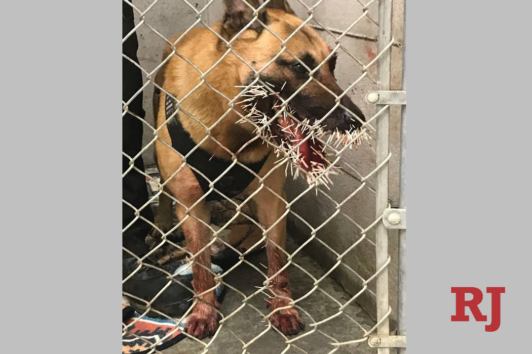 This photo taken Saturday, April 20, 2019, provided by the Coos County Sheriff's Department, sh ...