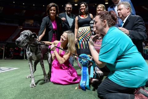 Dottie poses for a photo with judges after taking the Best in Show title during the Animal Foun ...