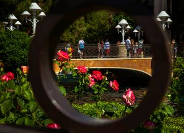 Roses are fully in bloom within the garden about the Wynn Esplanade on Wednesday, April 24, 201 ...