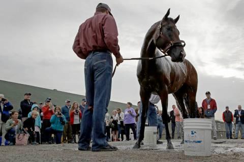 Kentucky Derby hopeful Omaha Beach gets a bath after a workout at Churchill Downs Tuesday, Apri ...