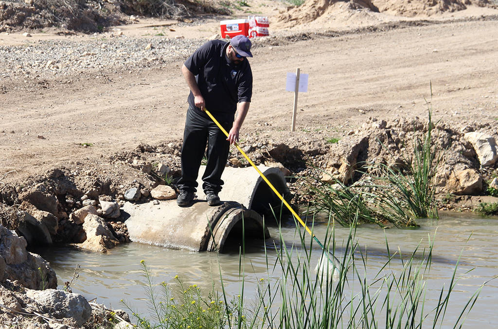Nevada fisheries biologist Brandon Senger uses a net to remove the carcasses of nonnative ...