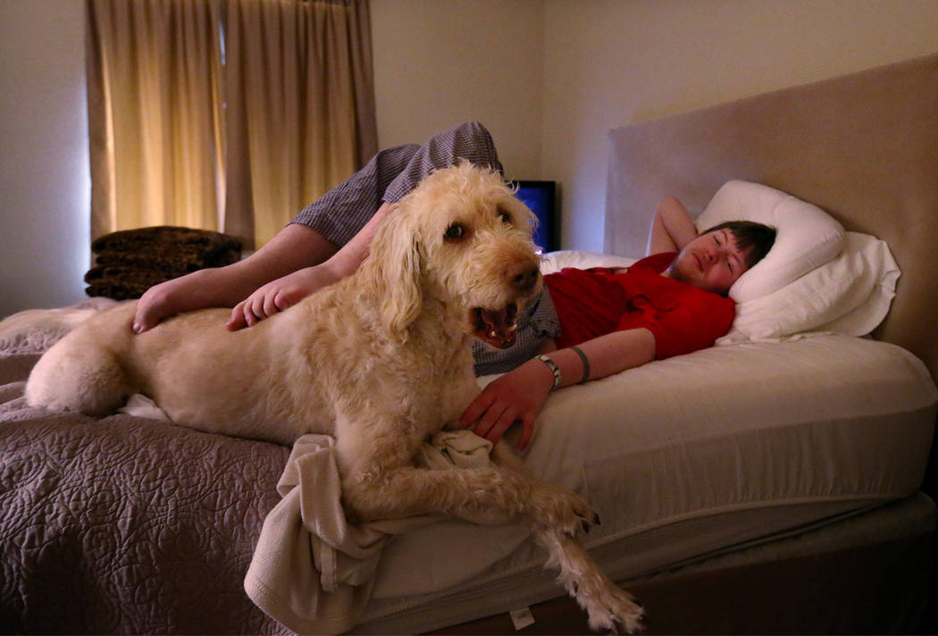 Grayson McClure, 23, rests with his service dog Yojimbo in his Reno home on Monday, May 9, 2016 ...