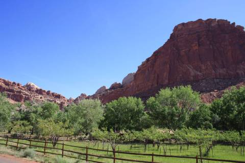 Capitol Reef National Park, Utah, is home to more than 3,100 fruit trees. The park provides han ...