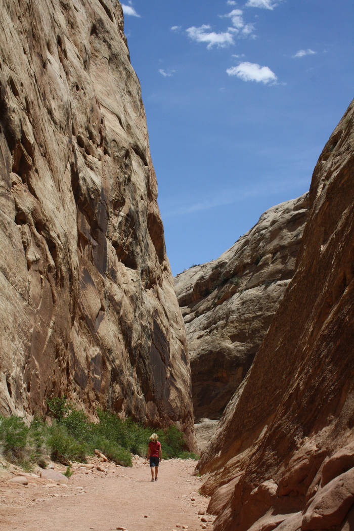 The Capitol Gorge Trail was the main east-west road through this remote area of Utah until 1962 ...