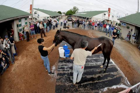 Kentucky Derby entrant Game Winner gets a bath after a workout at Churchill Downs Thursday, May ...