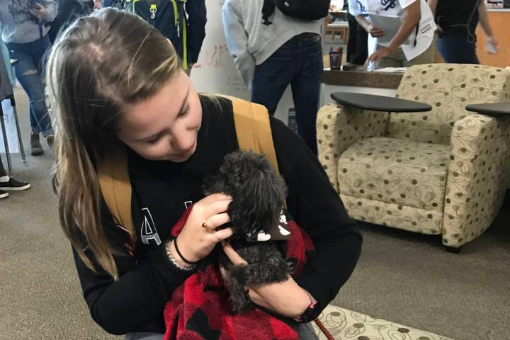 Sydney Werwinsky cuddles Teddy, a small poodle, at the Love Dog Adventures at CSN Charleston li ...
