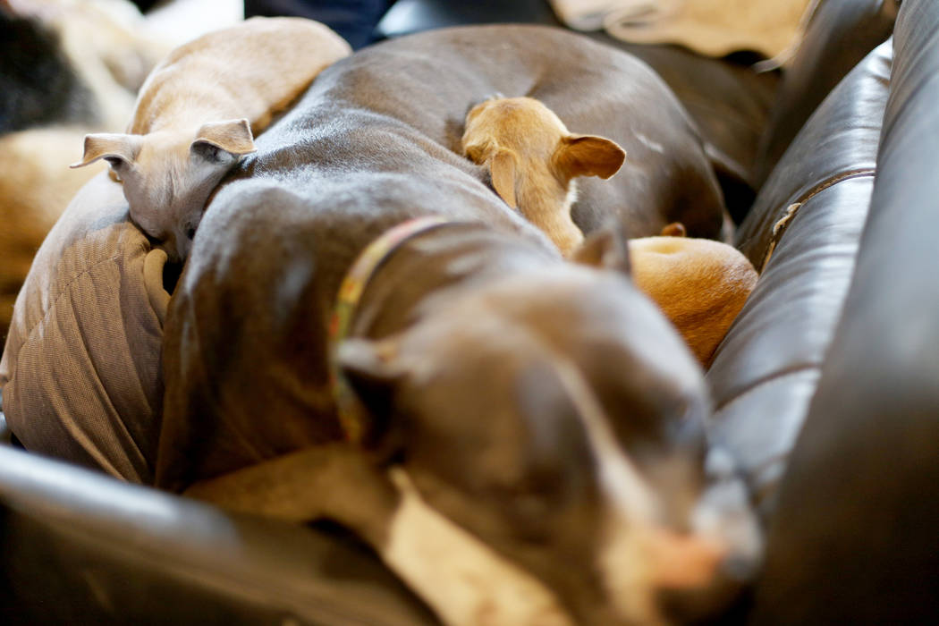 Queen, from left, Stella and Penny take a nap in The Asher House RV in the parking lot of Nevad ...